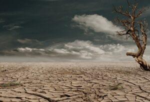 foto boom in woestijn